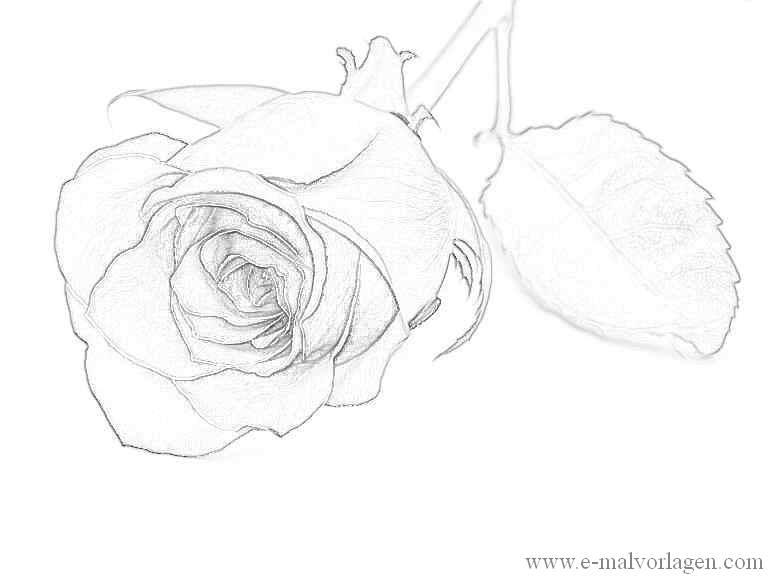 ausmalbild rosen 19  ausmalen ausmalbilder ausmalbild