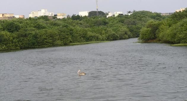 Smelly Adyar creek gets green makeover
