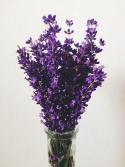 Beautiful Lavendel