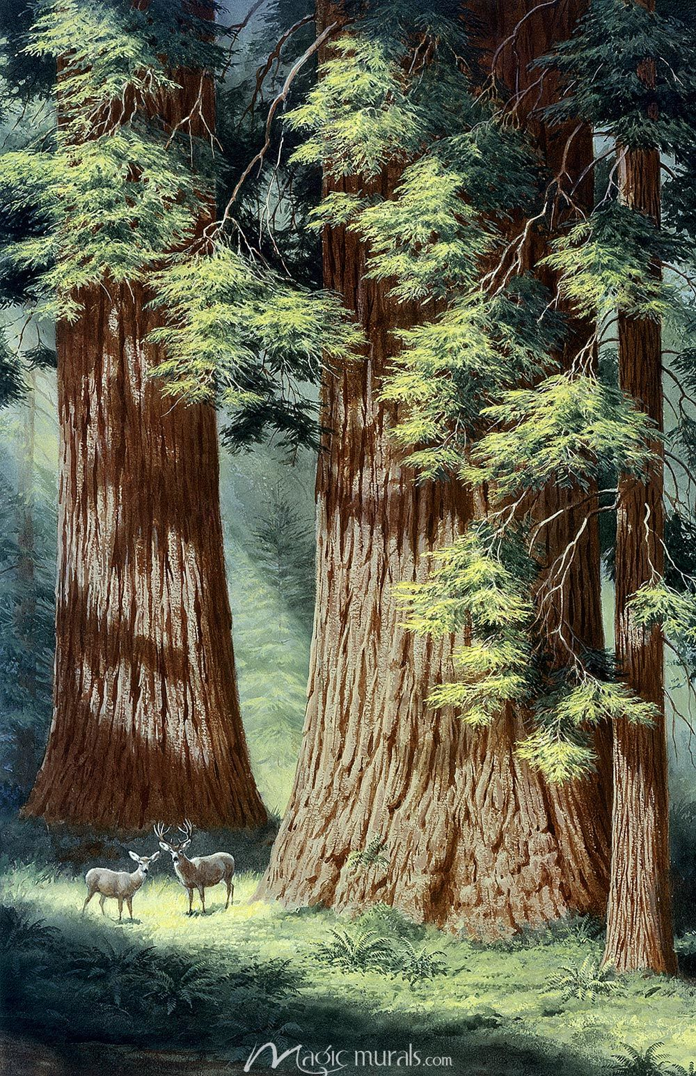 Redwood Trees Wallpaper Wall Mural By Magic Murals Redwood Tree Tree Trunk Painting Photo Tree