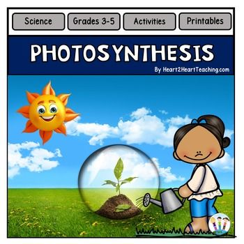 Photosynthesis activities for science centers vocabulary photosynthesis activities for science centers ccuart Image collections