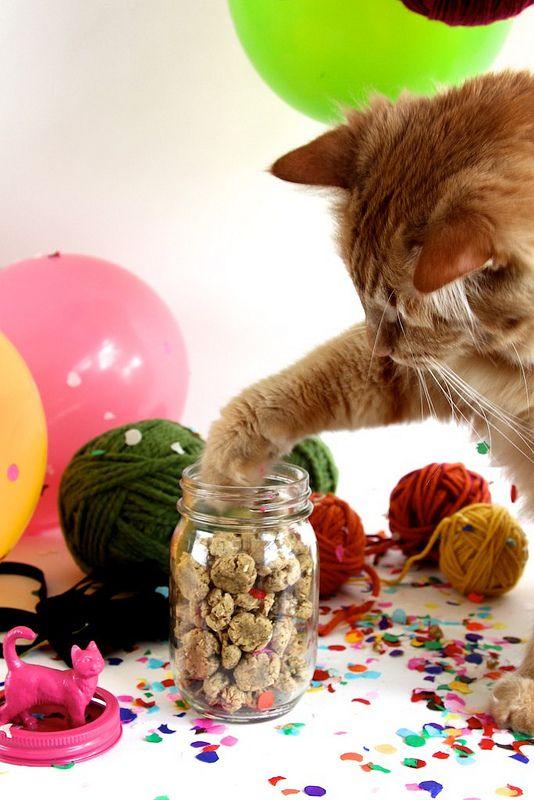 Tuna Catnip Kitty Treats Diy Cat Treats Tuna Cat Treats Cat Treats Homemade