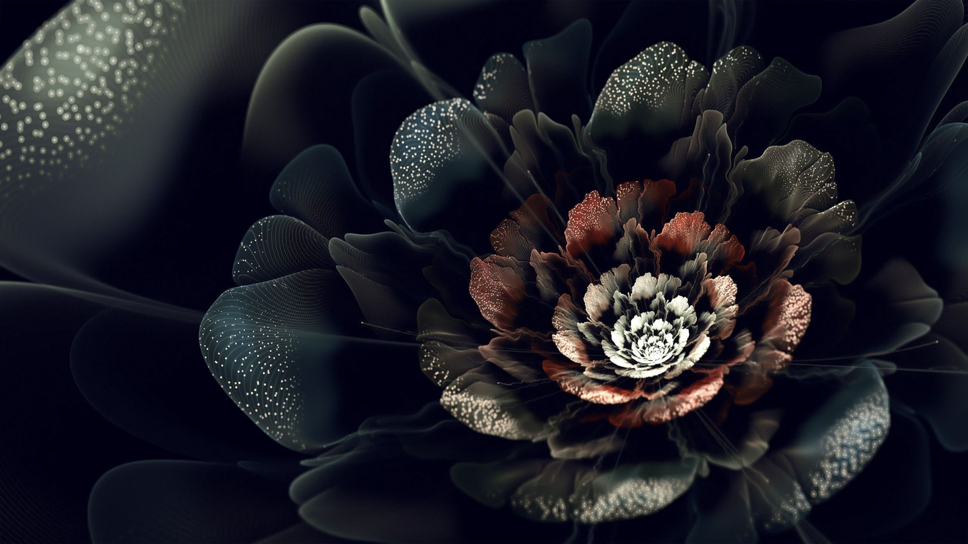 Black Rose Flower Wallpaper Find Best Latest Black Rose