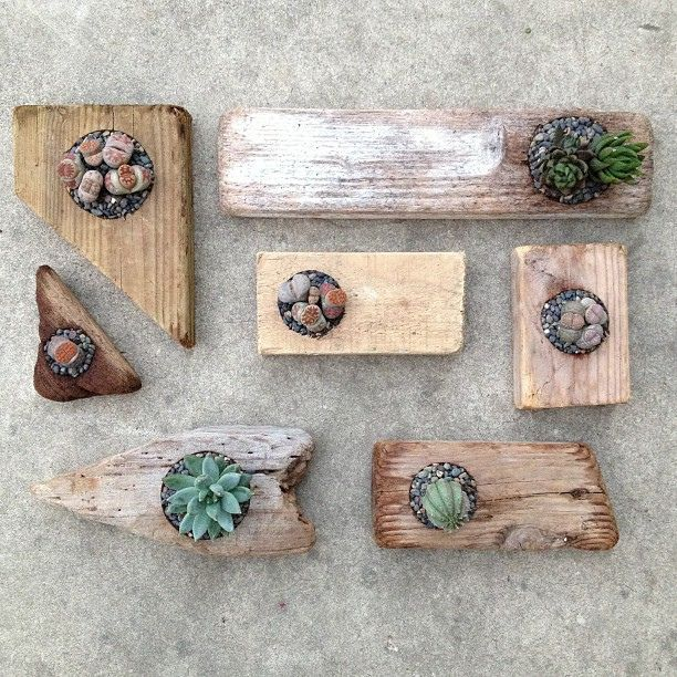 small succulent frames a new set of driftwood planters will be at the shop this weekend
