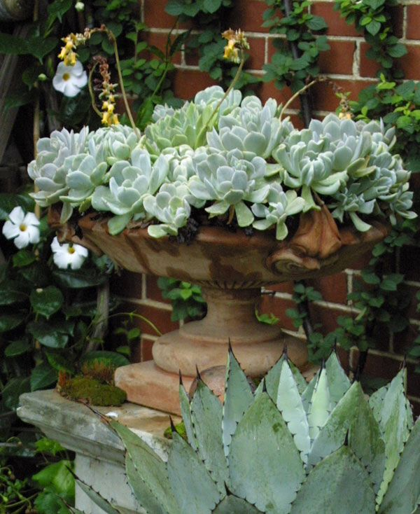 Succulent urn