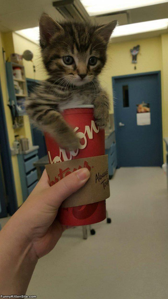 Cup_Of_Kitty