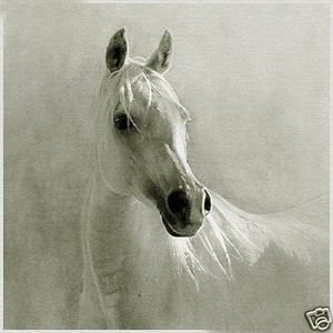 White horse oil painting. Beautiful horses...