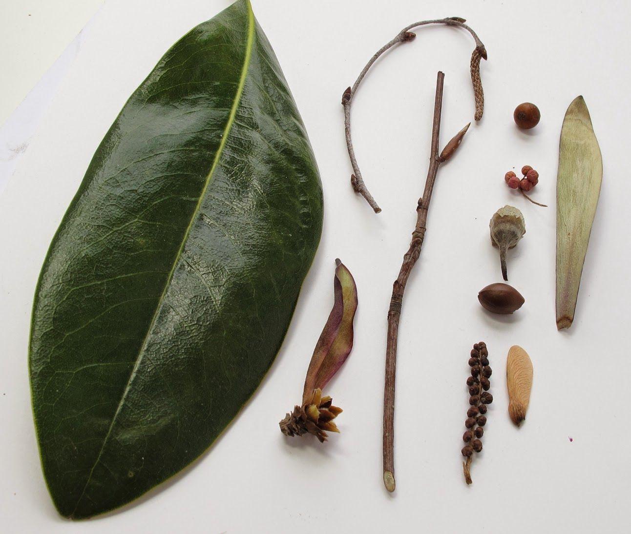 studio jeweler 'Arm Candy' Botanical Jewelry at The