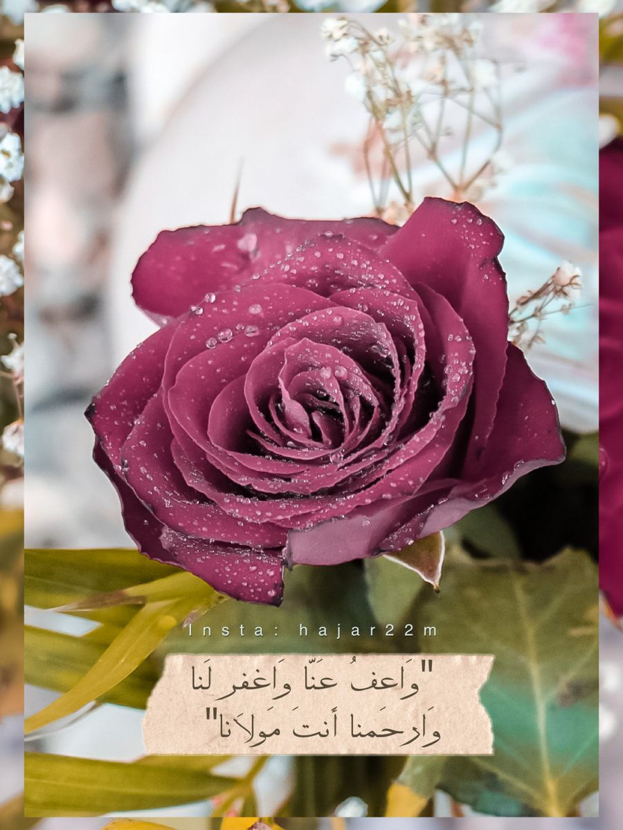 دعاء ورد Rose Flowers Plants