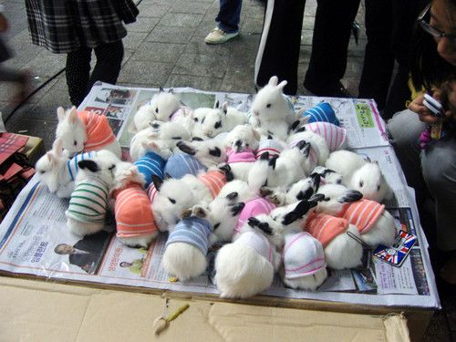 Baby bunnies in tiny sweaters