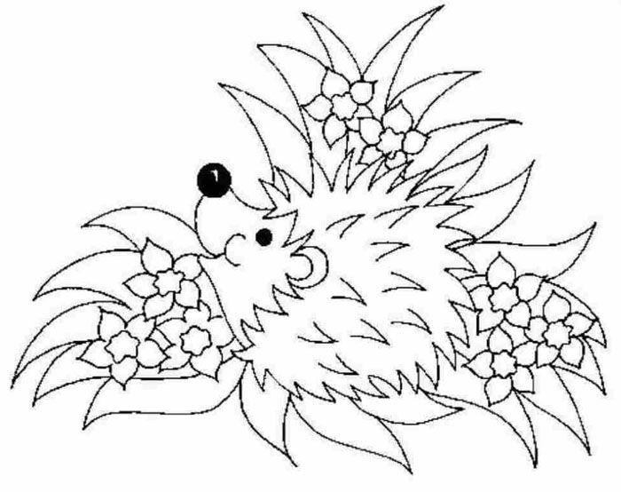 hedgehog and flowers  ausmalbilder zeichnungen ausmalen