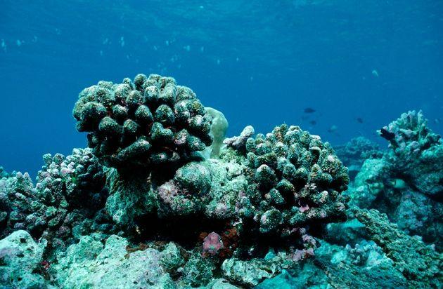 Epic El Niño yields massive data trove : Nature News & Comment