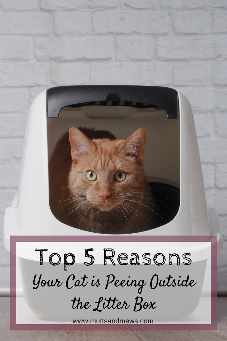 If Your Cat Is Peeing Outside Of The Litter Box There S A Reason For It Your Cat Is Trying To Tell You Something So Why Is Your Ca Litter Box Cat