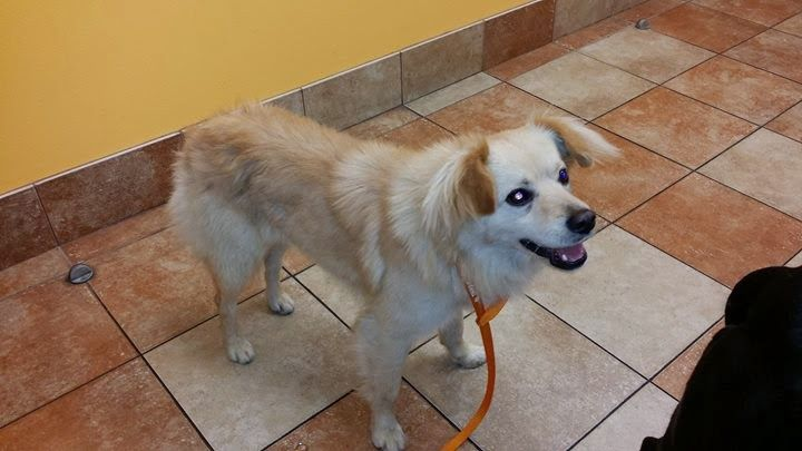 Southern California Adopt 16 Lb Mutty The Magnificent Mix Dog Adoption Dog Cat Dog Boarding