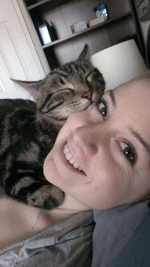 gatinhos tumblr - Pesquisa Google