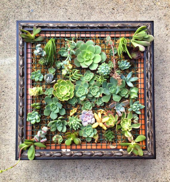 Dark Wood Framed Succulent Wall Art. $210.00, via Etsy.