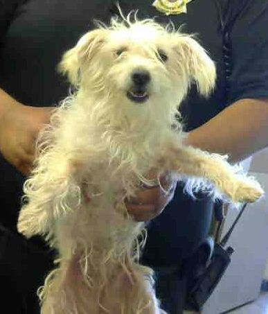 Pin By Peg Jackson Kucek On Urgent Adoptable Pets Rescue