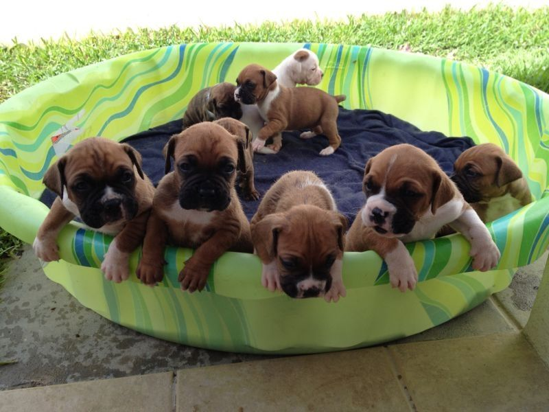Puppy Pool!!!!! I want all of them
