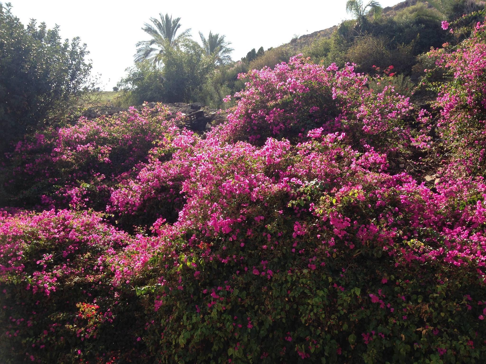 beautiful flowers, near the Sea of Galilee.