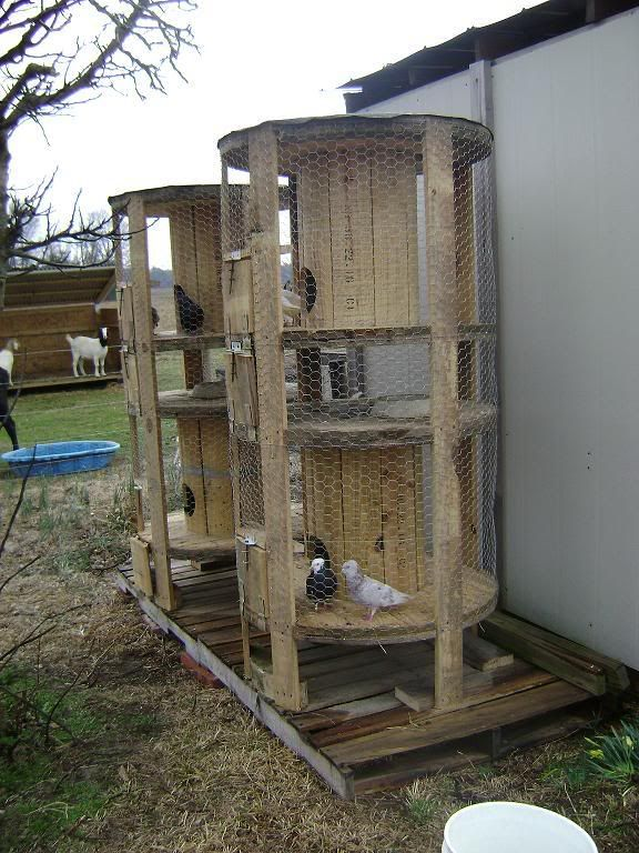 This is from a site called Backyard Chickens.com What an amazing idea for recycling those used wooden wire spools. Bunnies too!