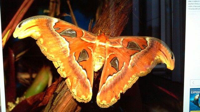 Beautifull moths