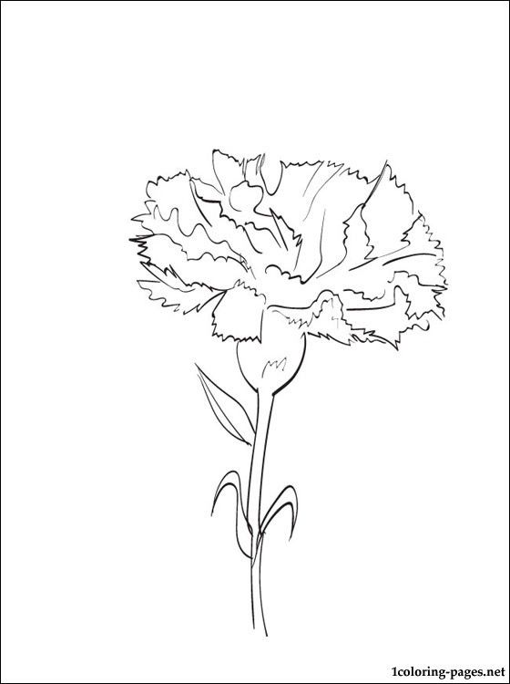 Coloring page Carnation | Coloring pages | Digital Images ...