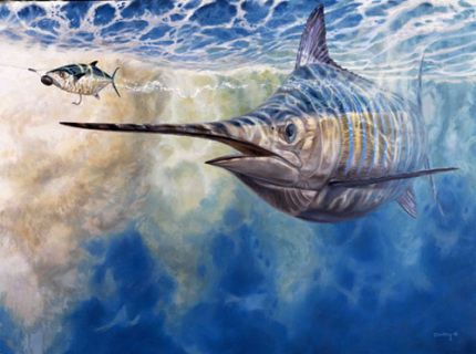 Big blue marlin chasing a rigged spanish mackerel bait. Mini 8 x 11 print is a open edition, not signed.   The canvas edition 50 Signed and Numbered.
