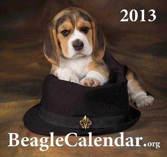 2013 Beagle Calendar  Proceeds Benefit Beagle Rescue Foundation of America