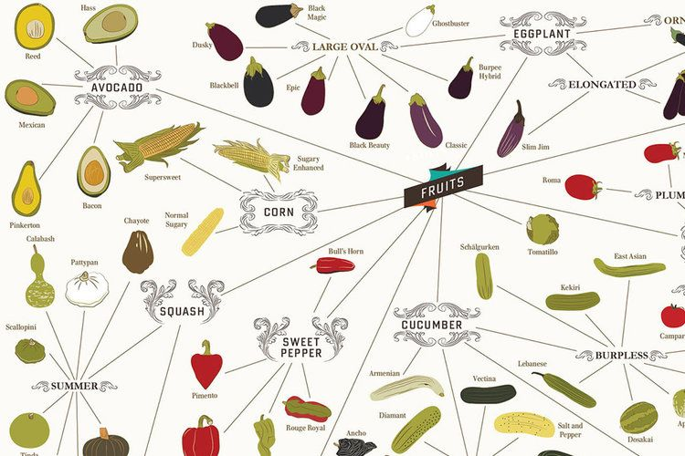 Fruits - Infographic: Over 400 Vegetables On One Incredibly Healthy Poster