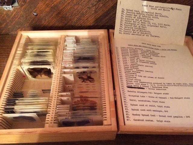Collection Adult Brain Stem 65 Antique Microscope Slides Boston U