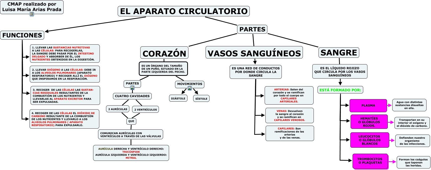 El Sistema Circulatorio Sistema Circulatorio Dibujo Del Aparato Circulatorio Aparato Circulatorio