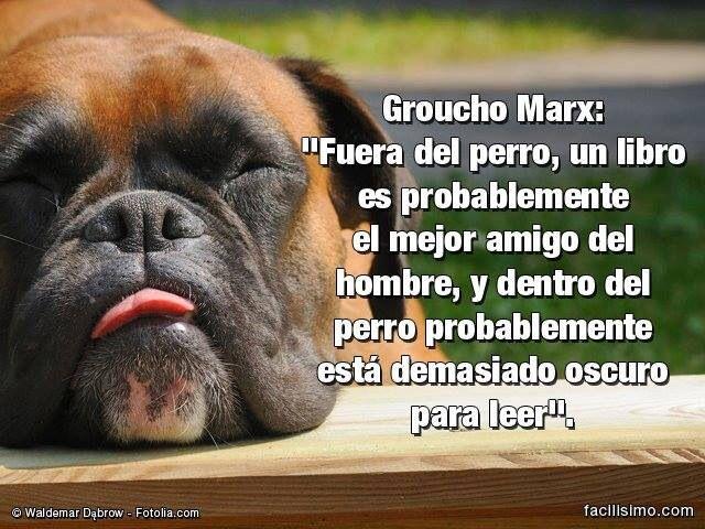 Groucho Marx XD