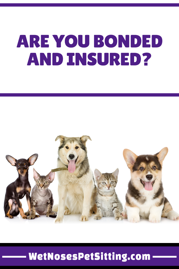 Are You Bonded and Insured? Wet Noses Pet Sitting Videos