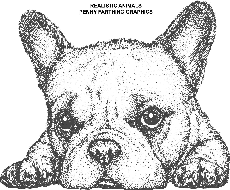 A Dog From Realistic Animals Dog Vector Dog Illustration Illustration Sketches