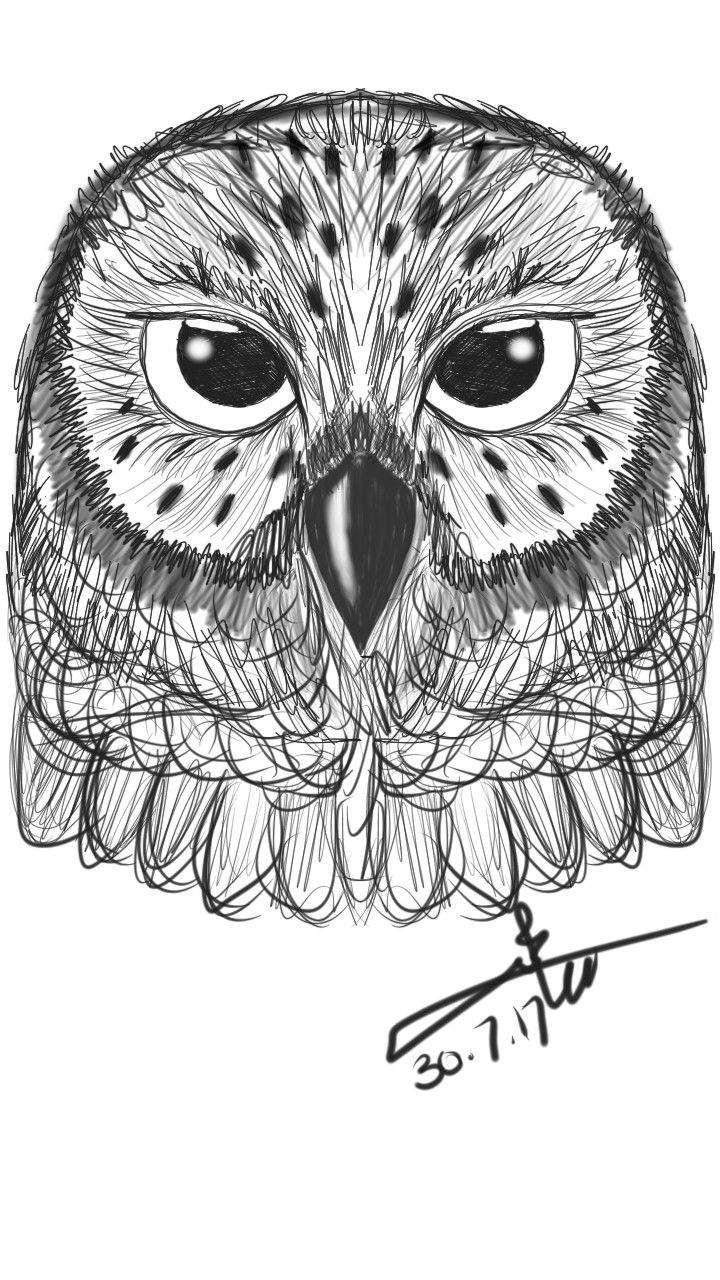 Owl بومة رسم Illustration Art Art Art Drawings
