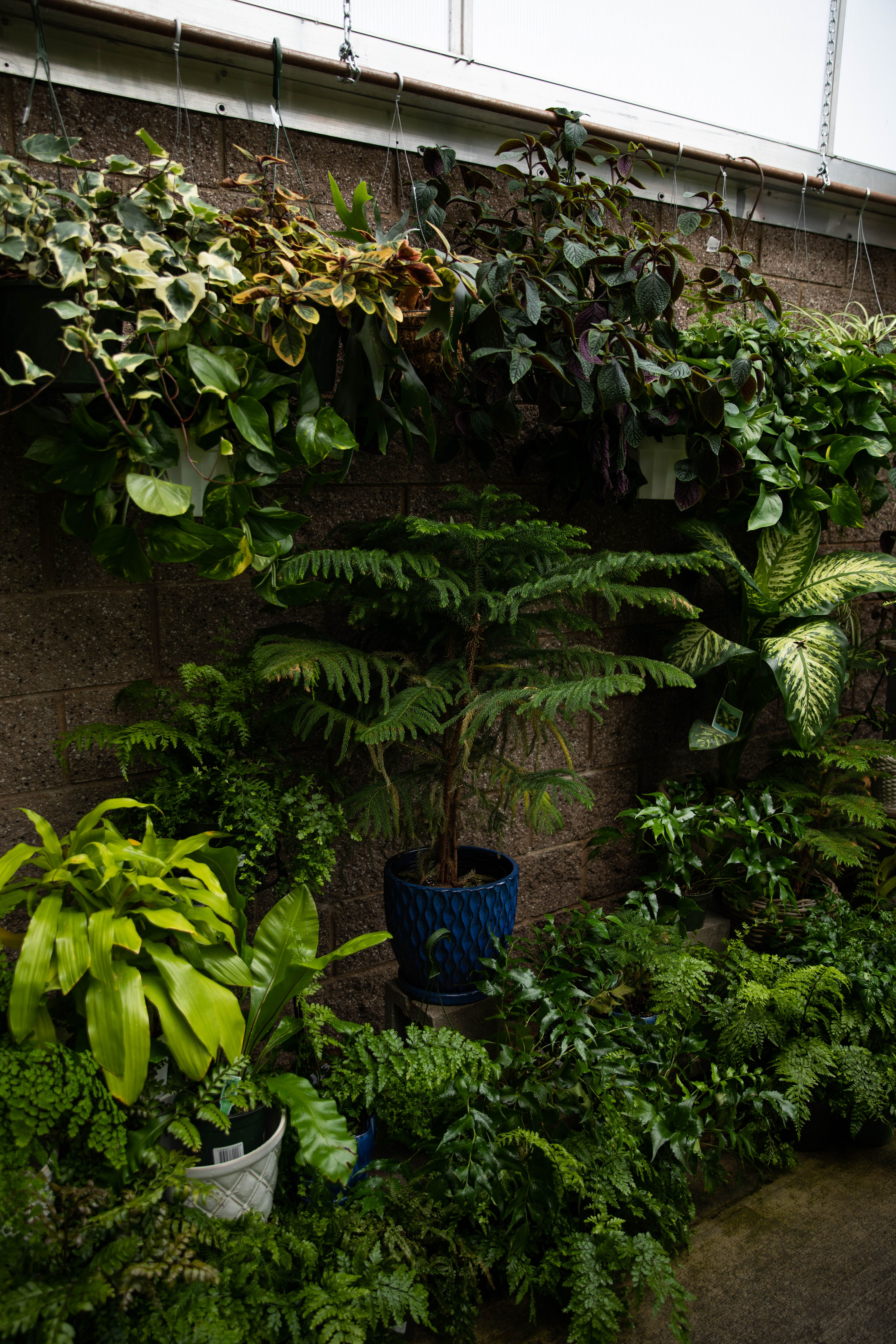 Houseplants At Our Nurseries