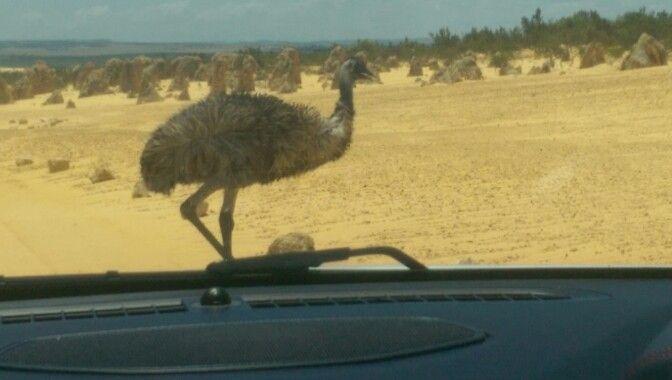 Emuuveouttheway