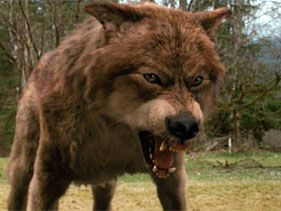 Taylor Lautner's Jacob Black as a wolf