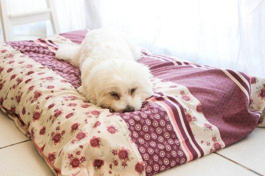 Les 25 meilleures id es de la cat gorie tapis pour chien - Tapis de fouille ...