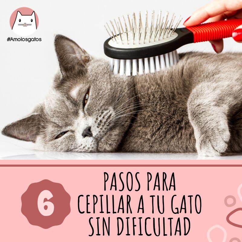 6 Pasos Sencillos Para Cepillar A Tu Gato Sin Dificultad Gatos Gatitos Divertidos Gatos Bonitos