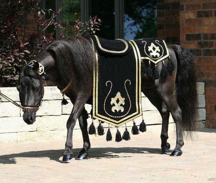 Arabian Costumes for Horses | Eclipse in Arabian costume. & Arabian Costumes for Horses | Eclipse in Arabian costume. | Horse ...