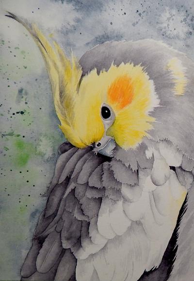 Check Out This Entry In Fur Feathers Boceto De Aves Dibujos De Animales Pinturas De Aves
