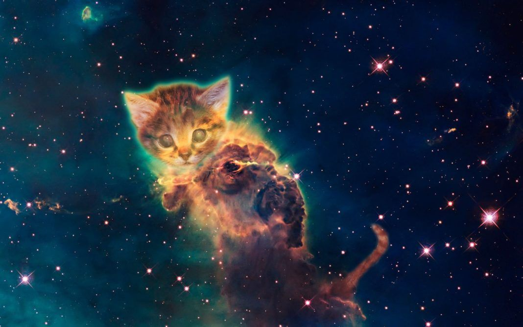 Your Cat Is Not Just A Pet You Might Be Sharing A Spiritual Connection Cat Background Galaxy Cat Cat Wallpaper