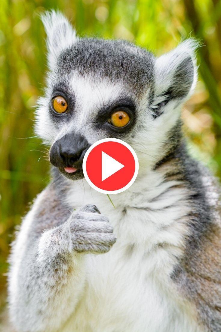 Angry Talking Animal Cool gifs, Talking animals, Gif