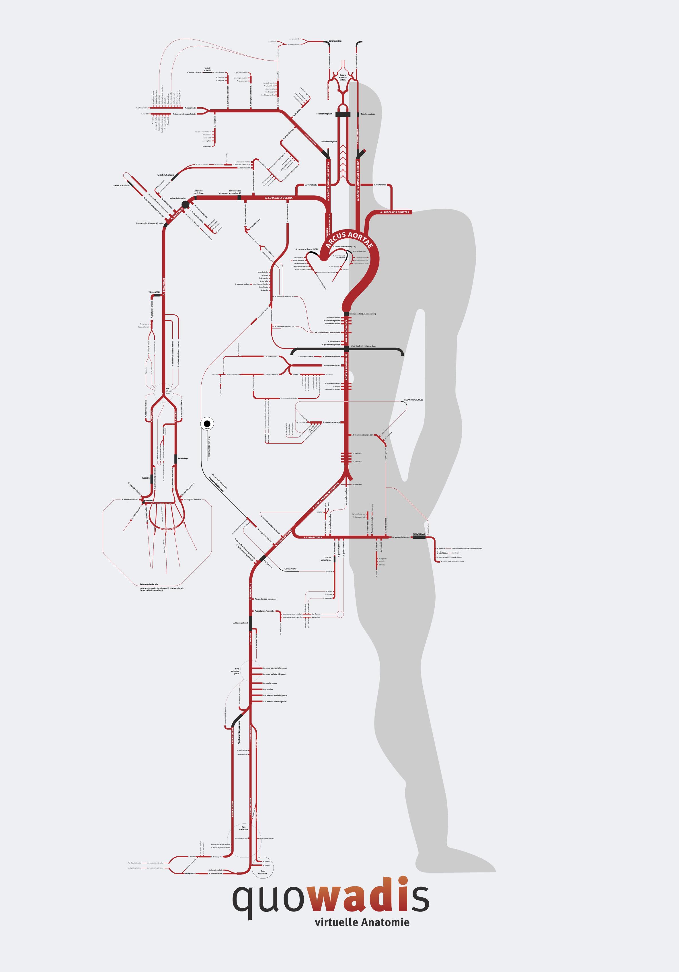 Anatomie online lernen mithilfe einer am Berliner U-Bahnplan ...