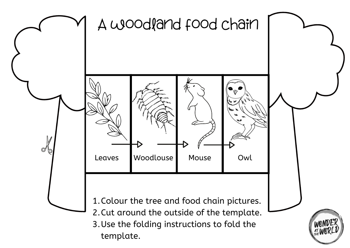 Food Chain Foldables Ks1