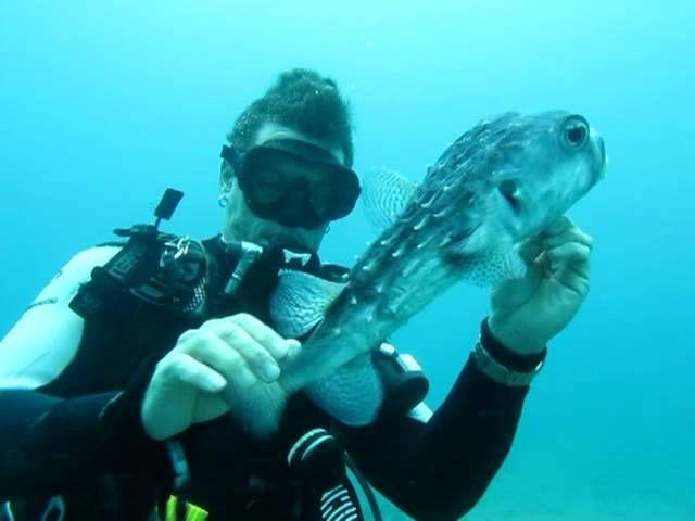 (Video) Penyelam Menyelamatkan Puffer Fish | Berita Unik | Kata Kata Cinta Romantis
