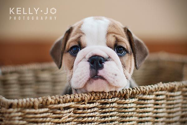 The Most Scrumptiously Wrinkly Dogs On The Internet Cute Animals