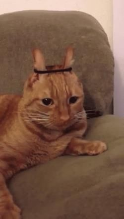 I'm conejo!