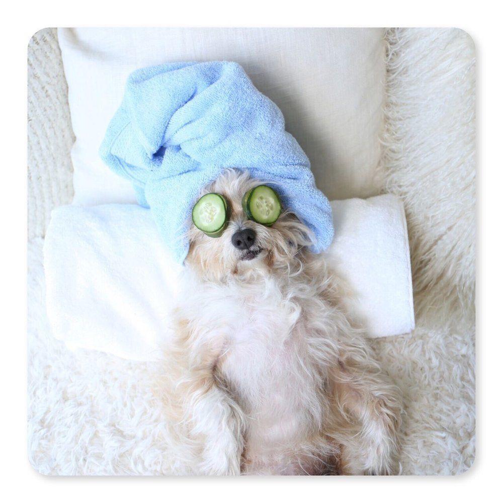 Doggy Spa in 2020 Doggie day spa, Dog spa, Diy spa day